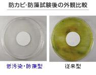 防カビ・防藻試験後の外観比較